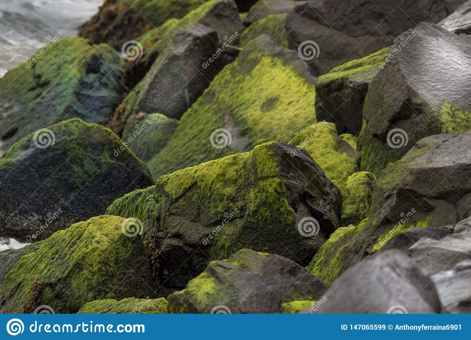 Moss And Algae Chondrus Crispus Stock Image Image Of Slime