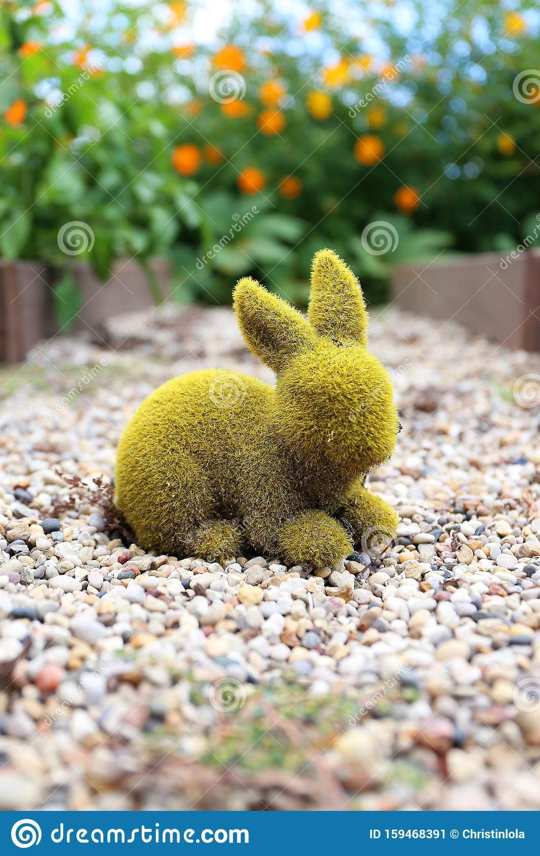 10 Ways To Decorate With Green Moss: Green Moss Covered Rabbit Statue Decorating Garden Of Orange Cosmo Flowers Stock Image