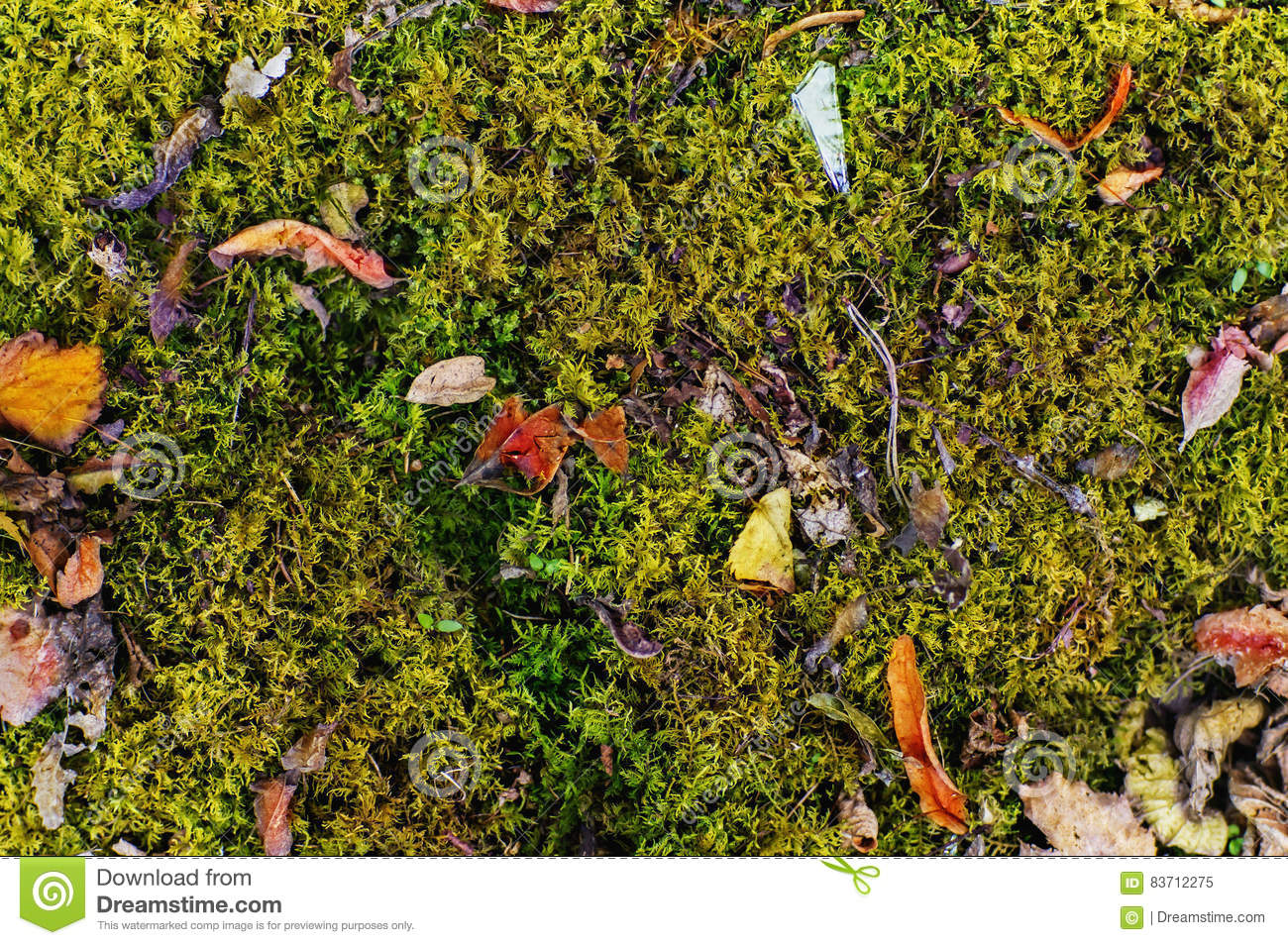 Green Moss With Dried Leaves Background Stock Photo