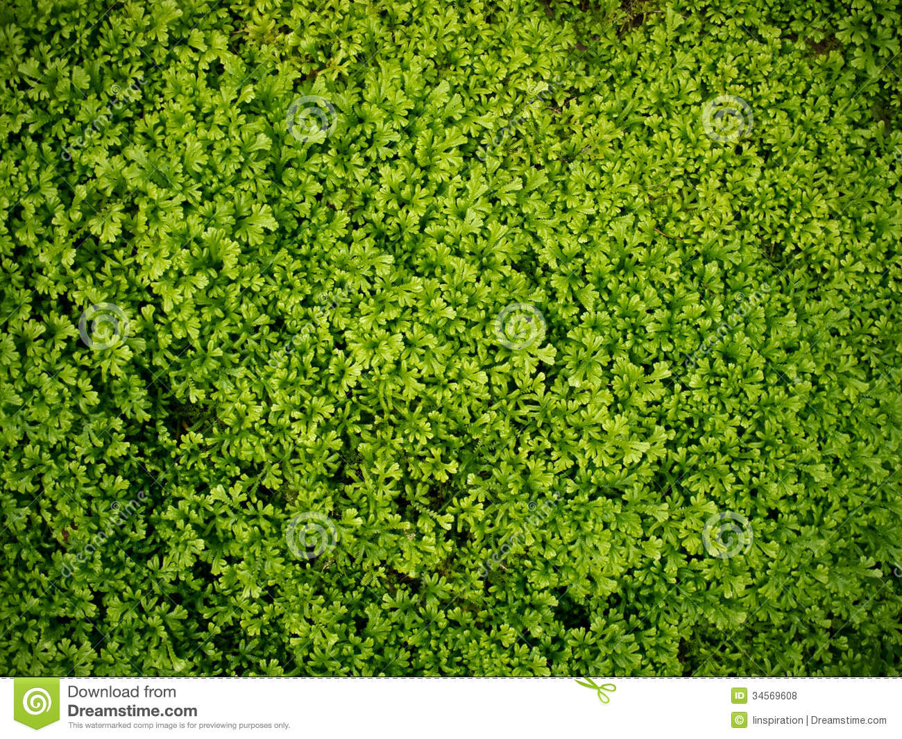 green mossgrass background royalty free stock photos
