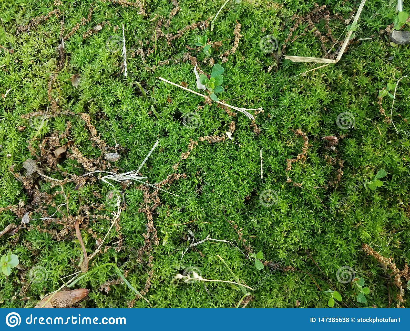 Green Moss And Grass And Weeds On Ground Outdoor Stock Photo