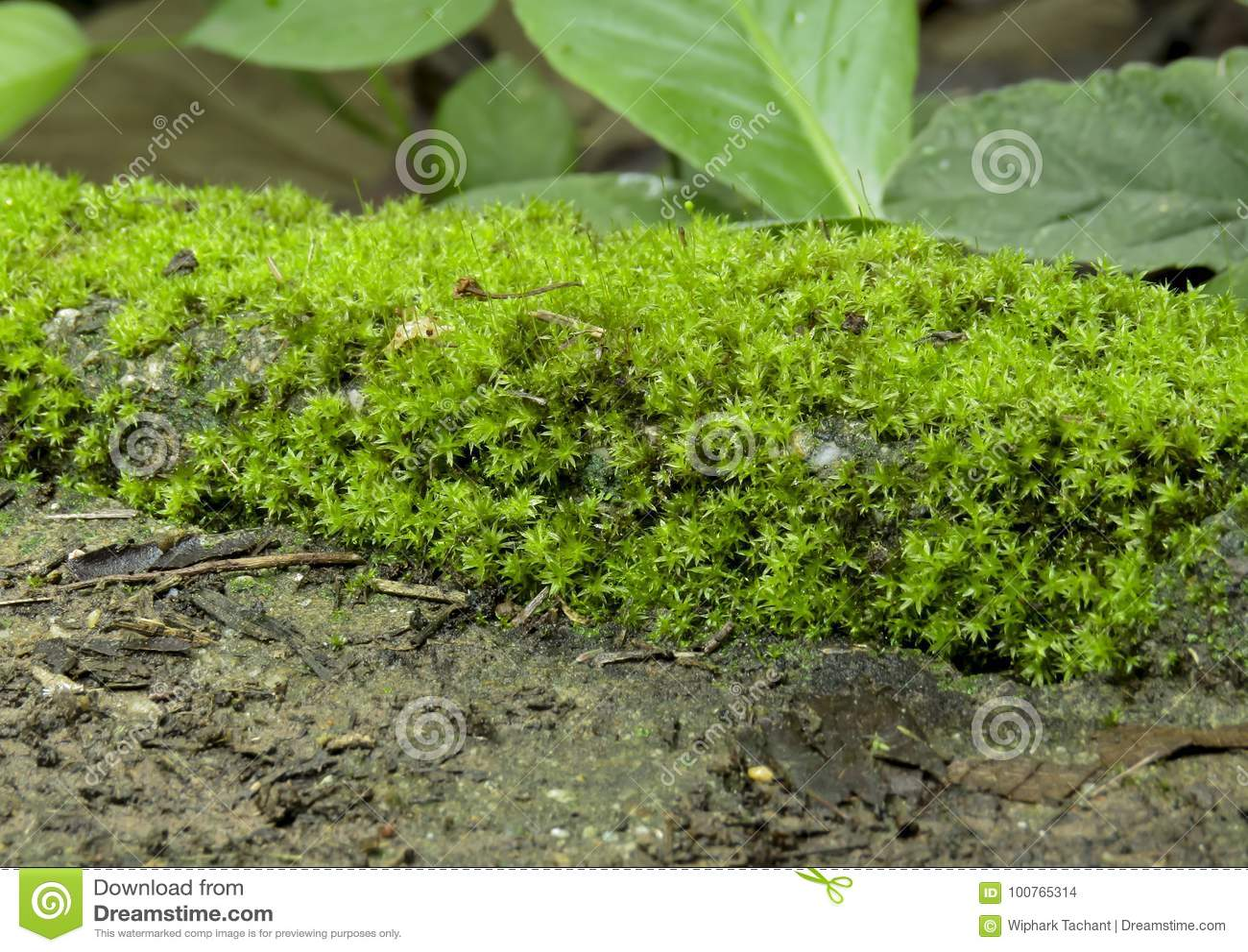 Date kvinner i Moss