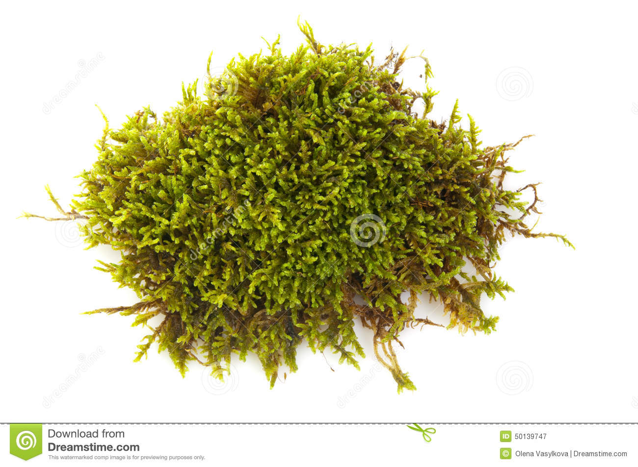 green moss royalty free stock photo cartoondealer com fungi clipart realistic graphic Book Clip Art