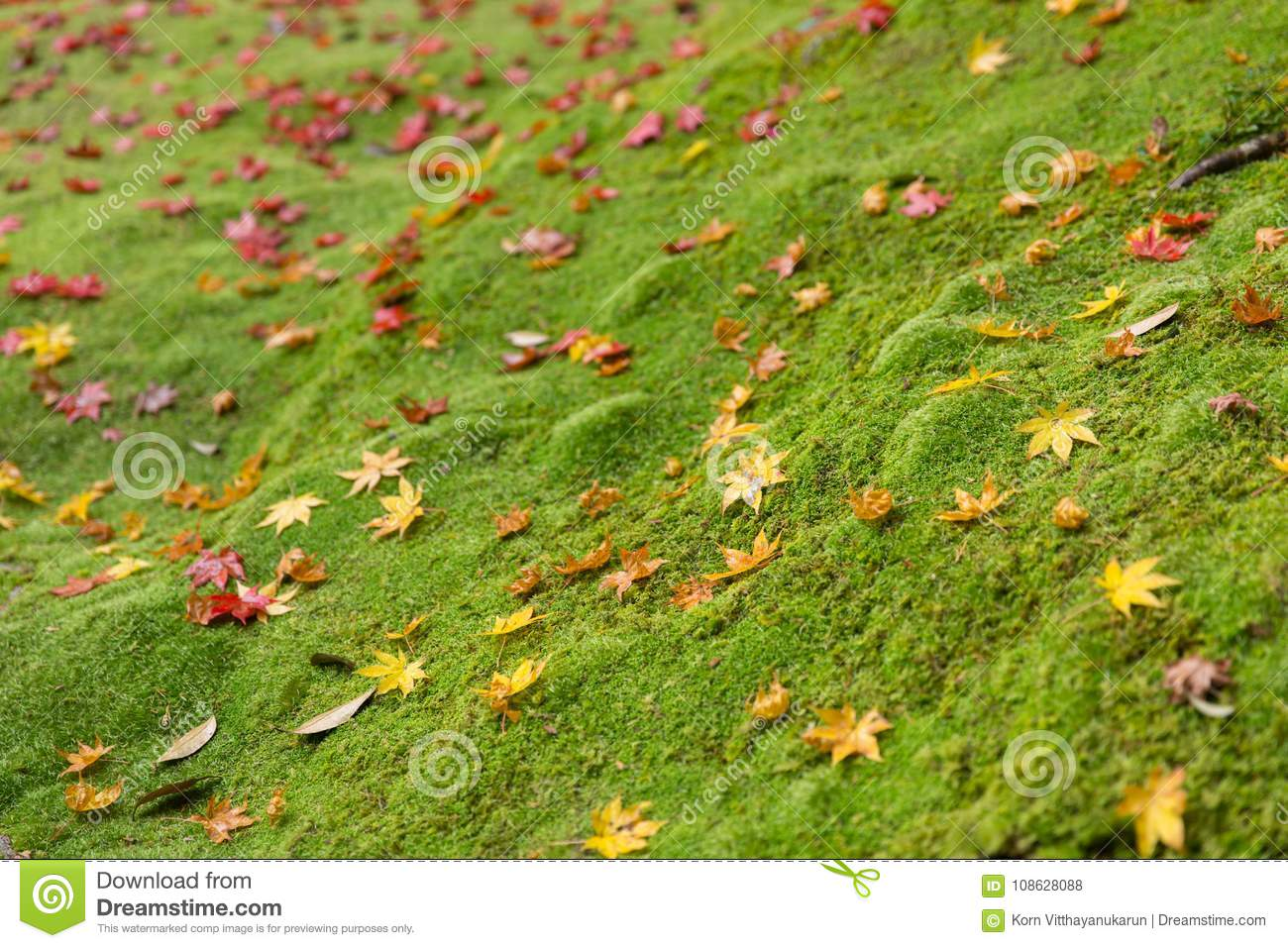 Green moss with maple leaf drop rainforest ground