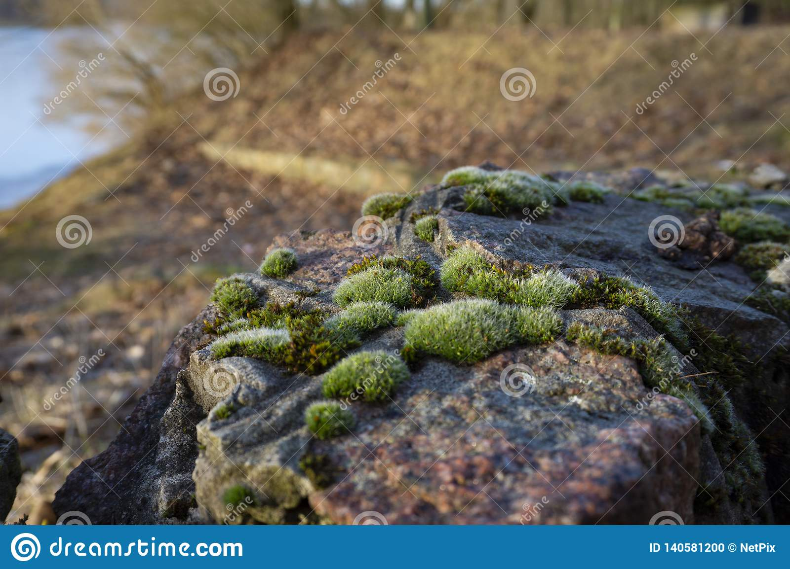 Moss on stones in close-up