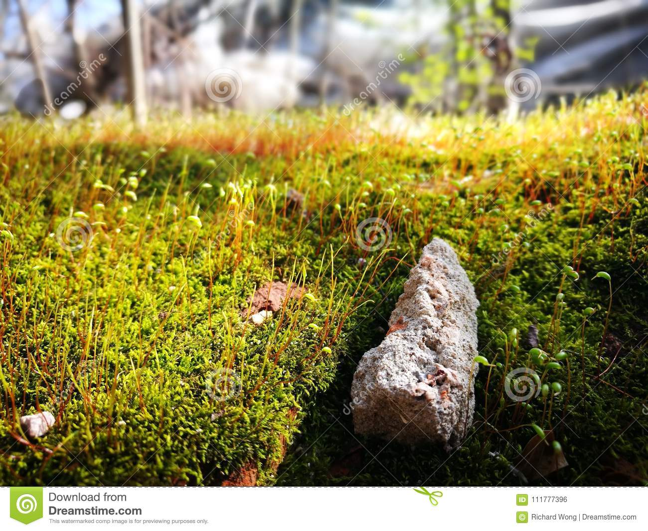 Green moss with red stem