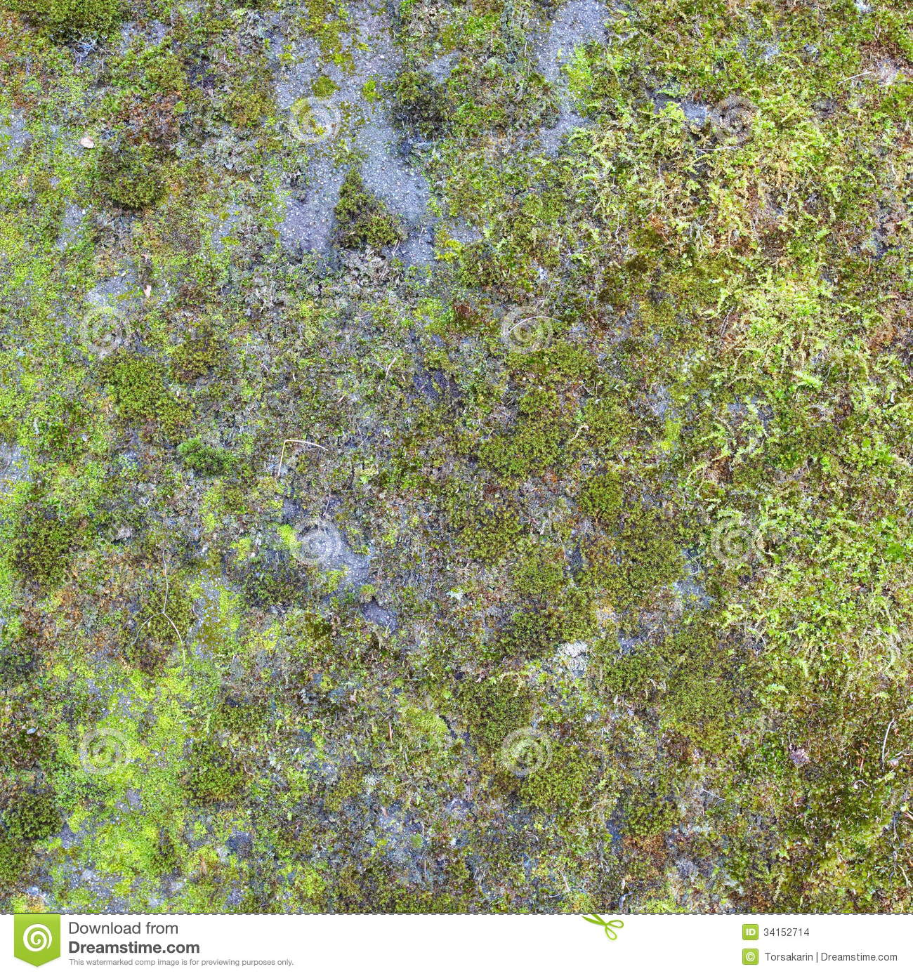Green Moss Stock Images - Image: 34152714