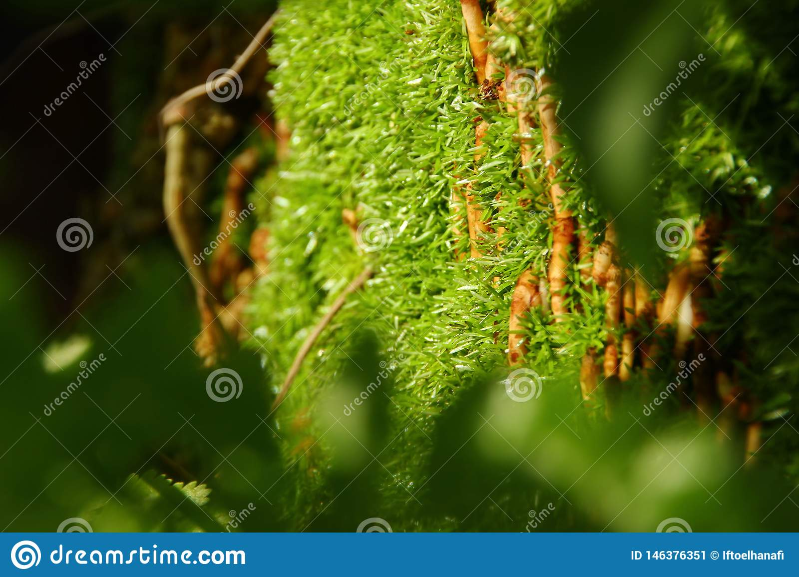 Moss attached to a tree, by taking some focus,