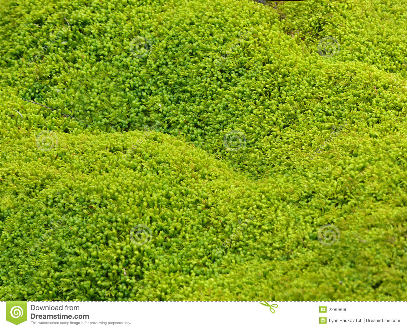 green moss texture background royalty free stock images. Black Bedroom Furniture Sets. Home Design Ideas