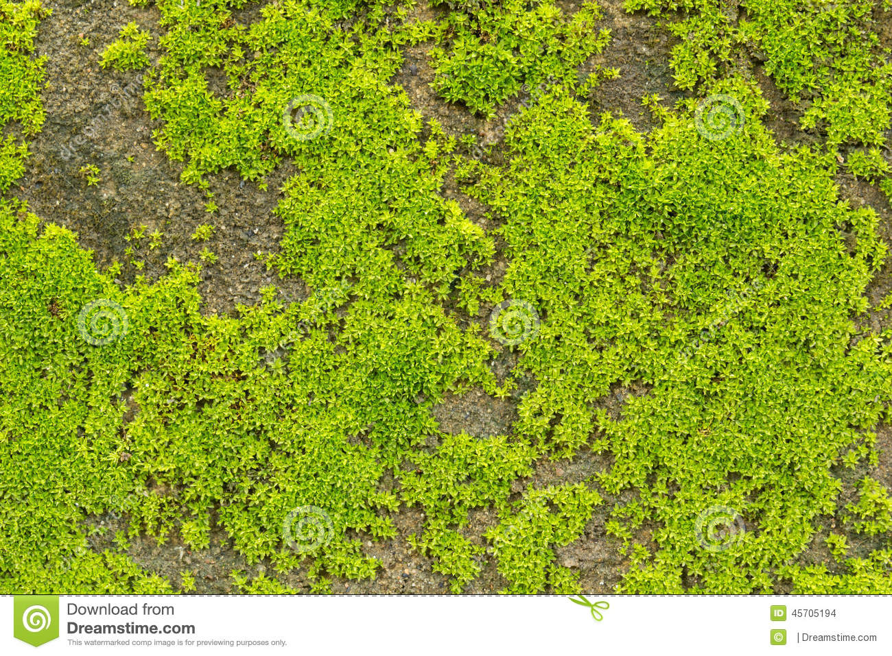 green moss texture stock photo image 45705194. Black Bedroom Furniture Sets. Home Design Ideas