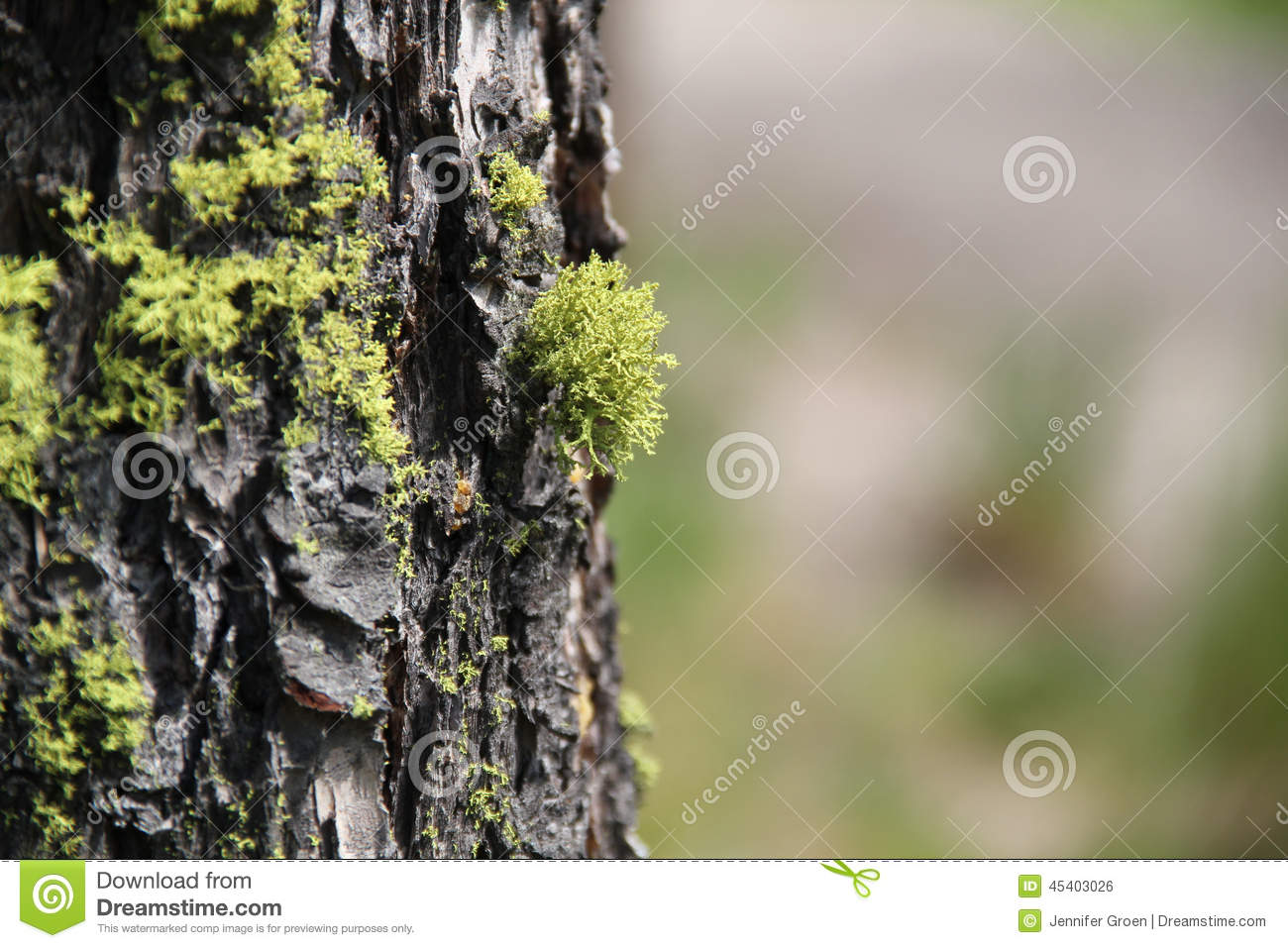 Green Moss on a Tree Trunk 3