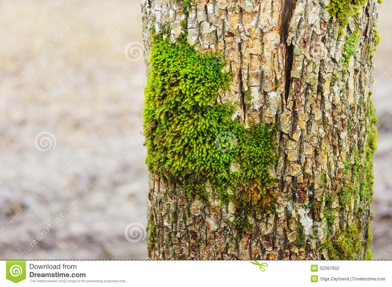 Image Result For How To Remove Mold From Wood