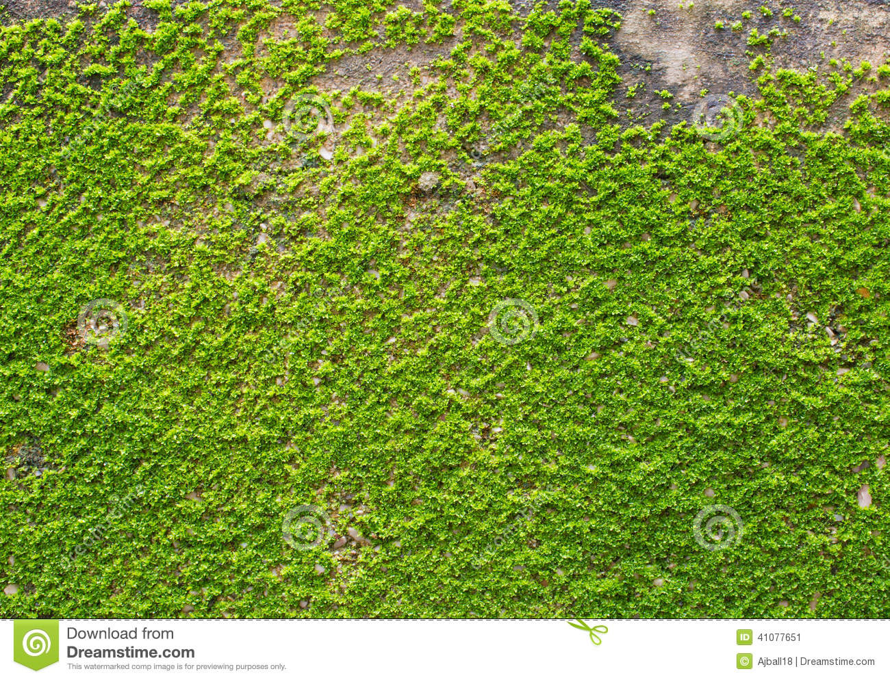 green moss on wall texture stock image image of ancient 41077651. Black Bedroom Furniture Sets. Home Design Ideas