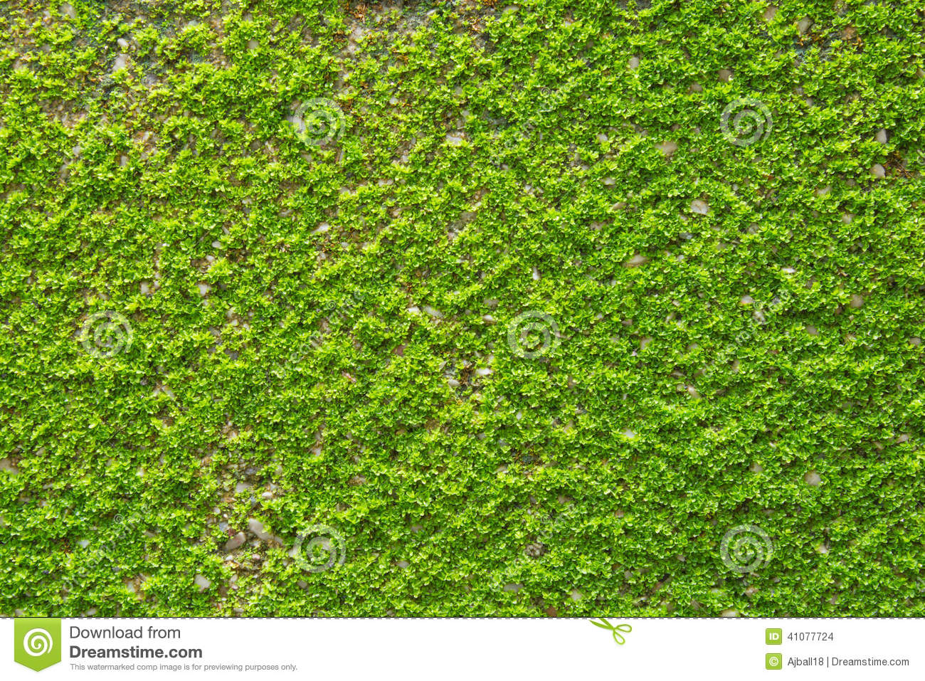 green moss on wall texture stock photo image of plaster 41077724. Black Bedroom Furniture Sets. Home Design Ideas