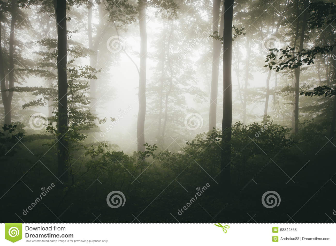 Green Natural Forest With Fog Stock Photo