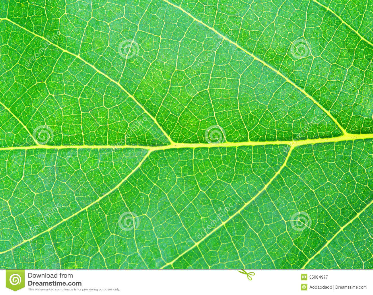 Green natural leaf texture stock image. Image of backdrop - 35084977