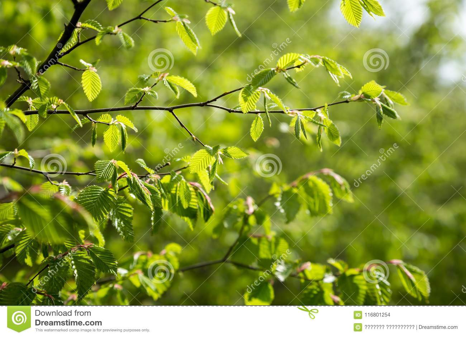 Green natural texture. Close up.