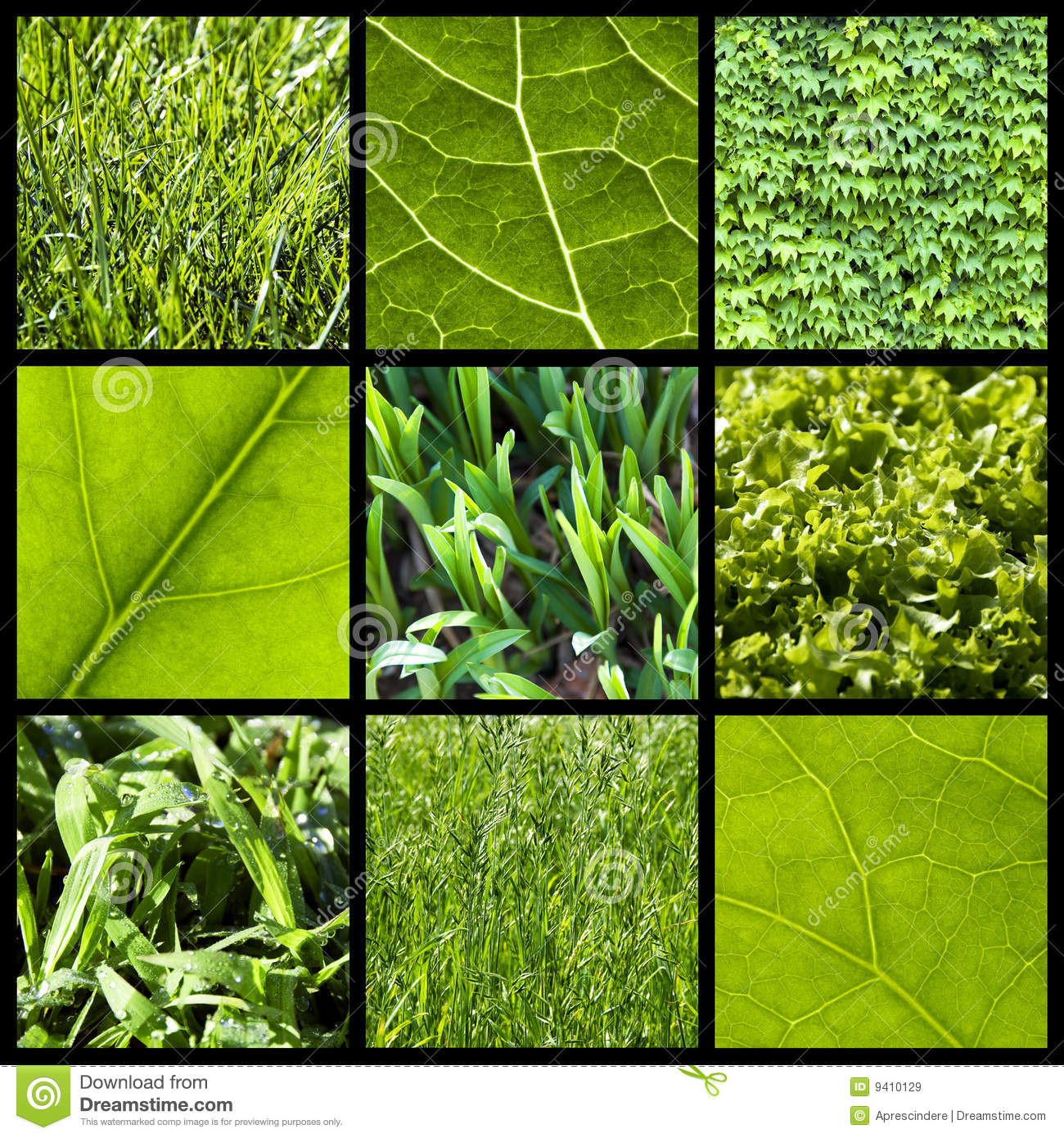 Green Nature Background Collage Stock Image Image 9410129