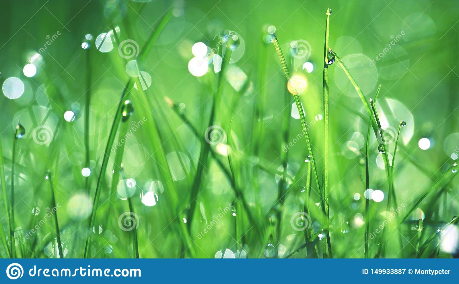 Green Nature Beautiful Close Up Photo Of Nature Green Grass With