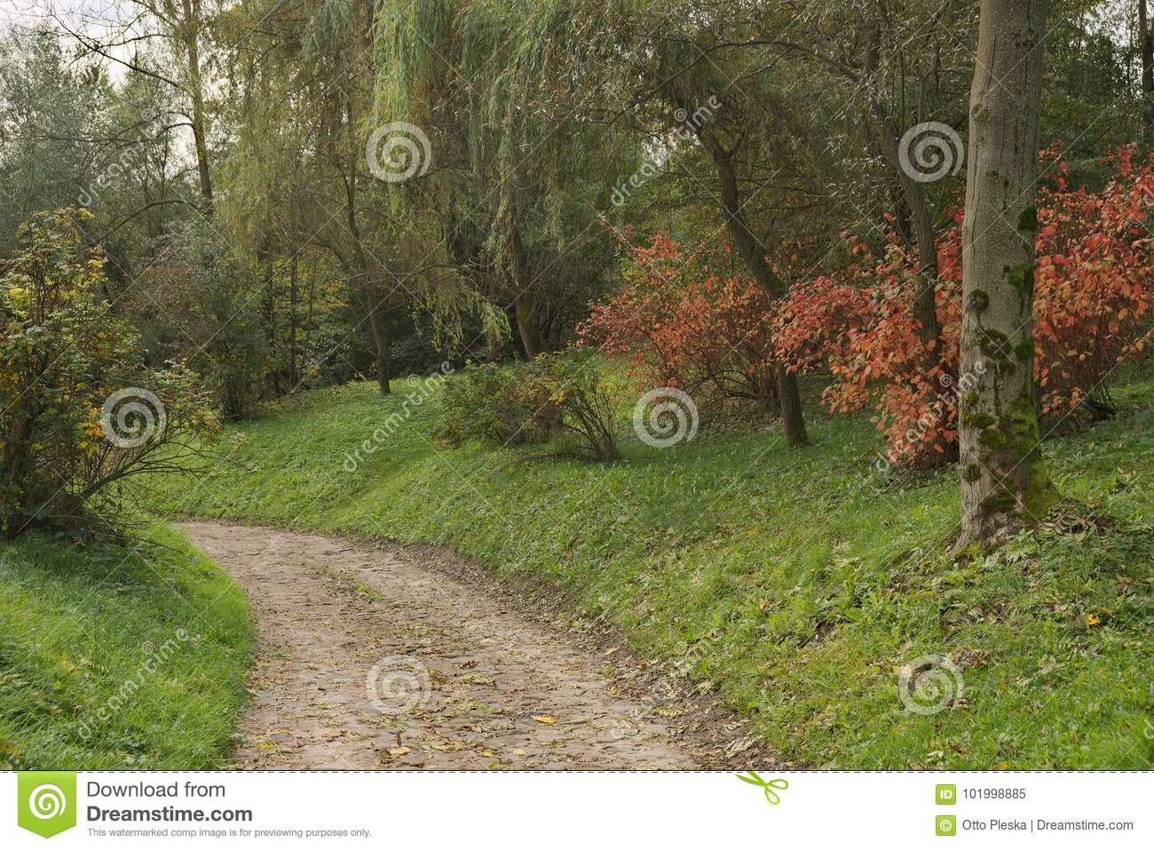 Green Nature Landscape During Fall Season With Autumn Tree Colors ...