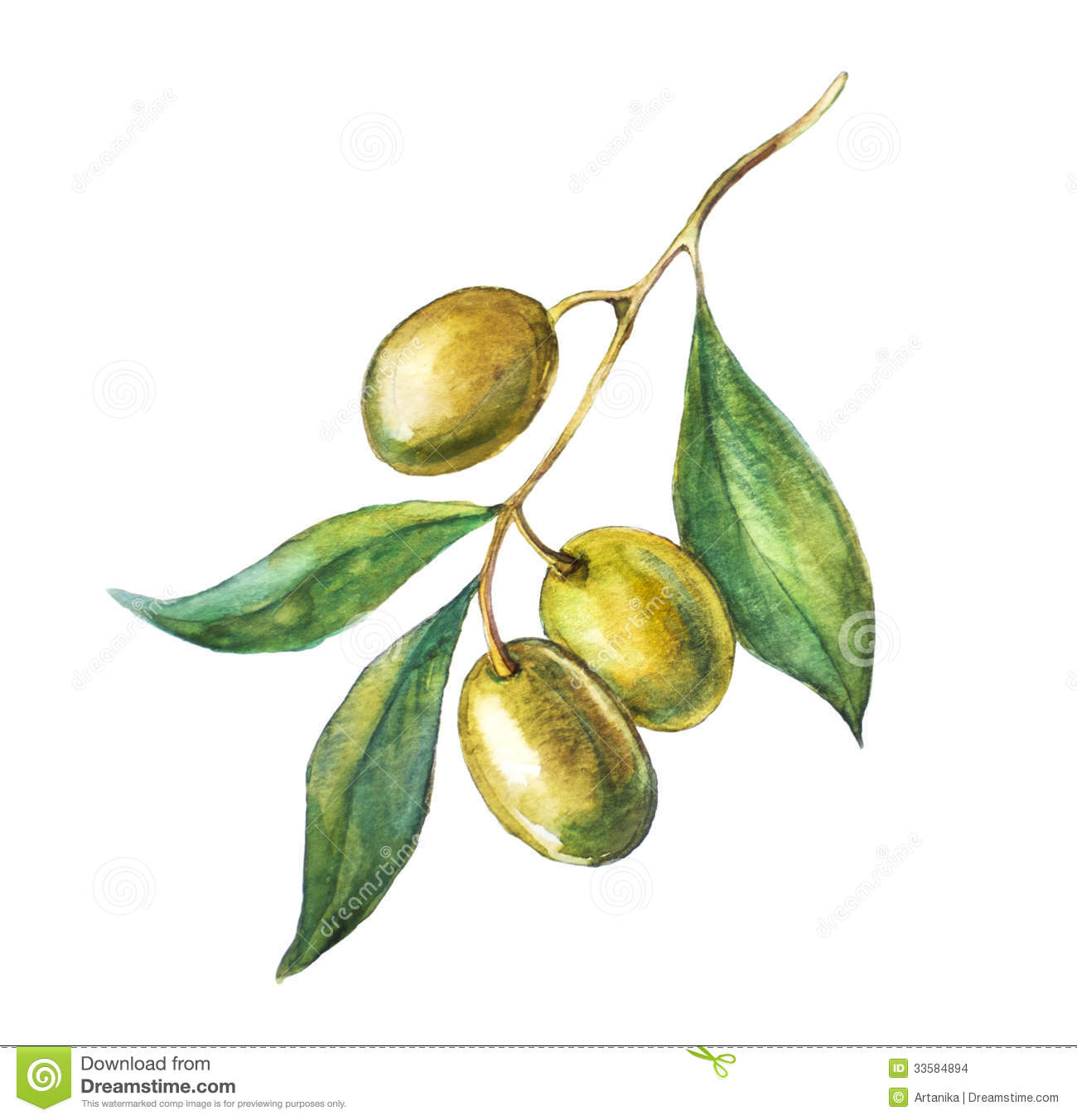 Green Olive Branch Stock Images - Image: 33584894 Оливки Рисунок