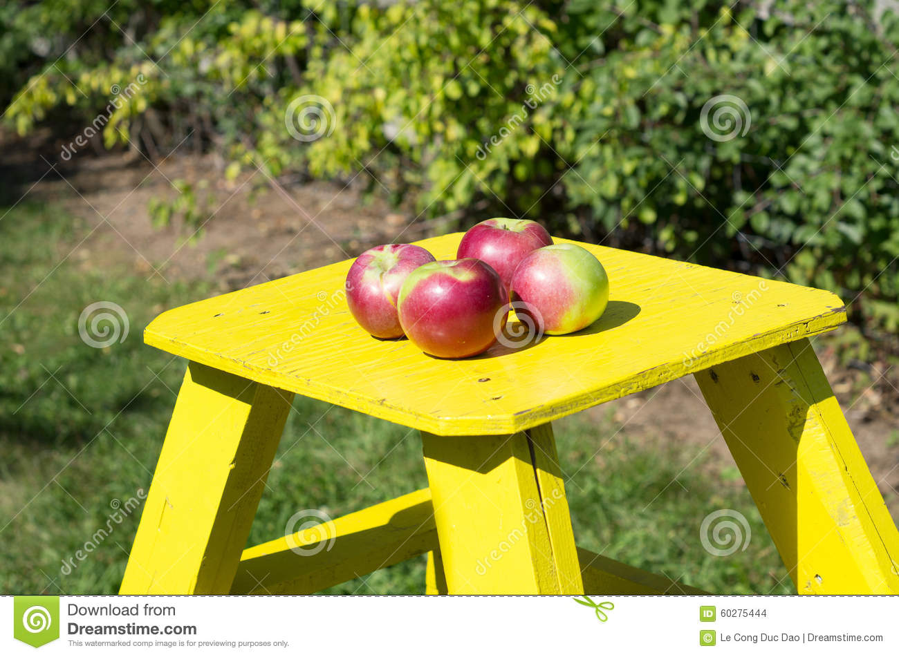 Green Orchard With Yellow Wooden Ladder Stock Photo