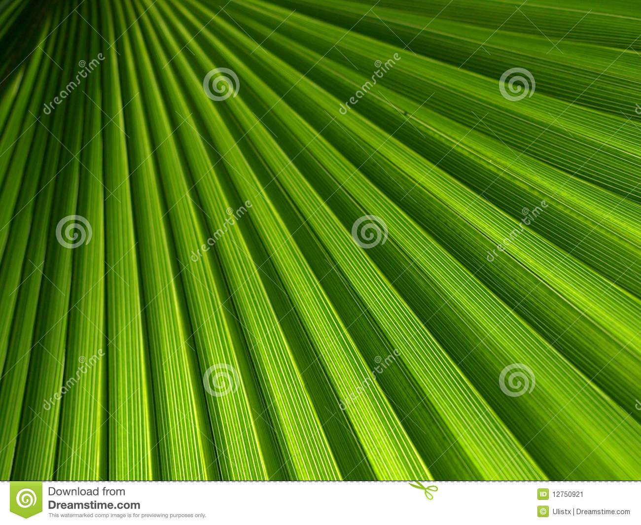 Green Palm Leaf Royalty-Free Stock Photography