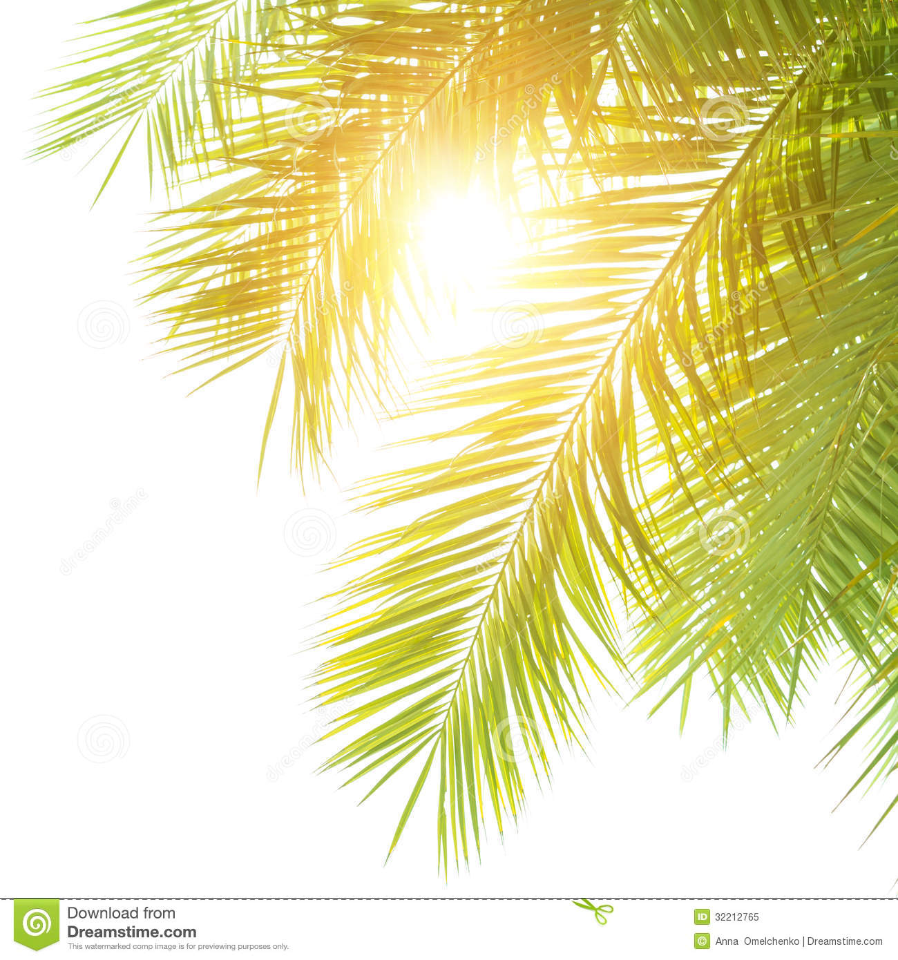 green palm leaves summer - photo #20
