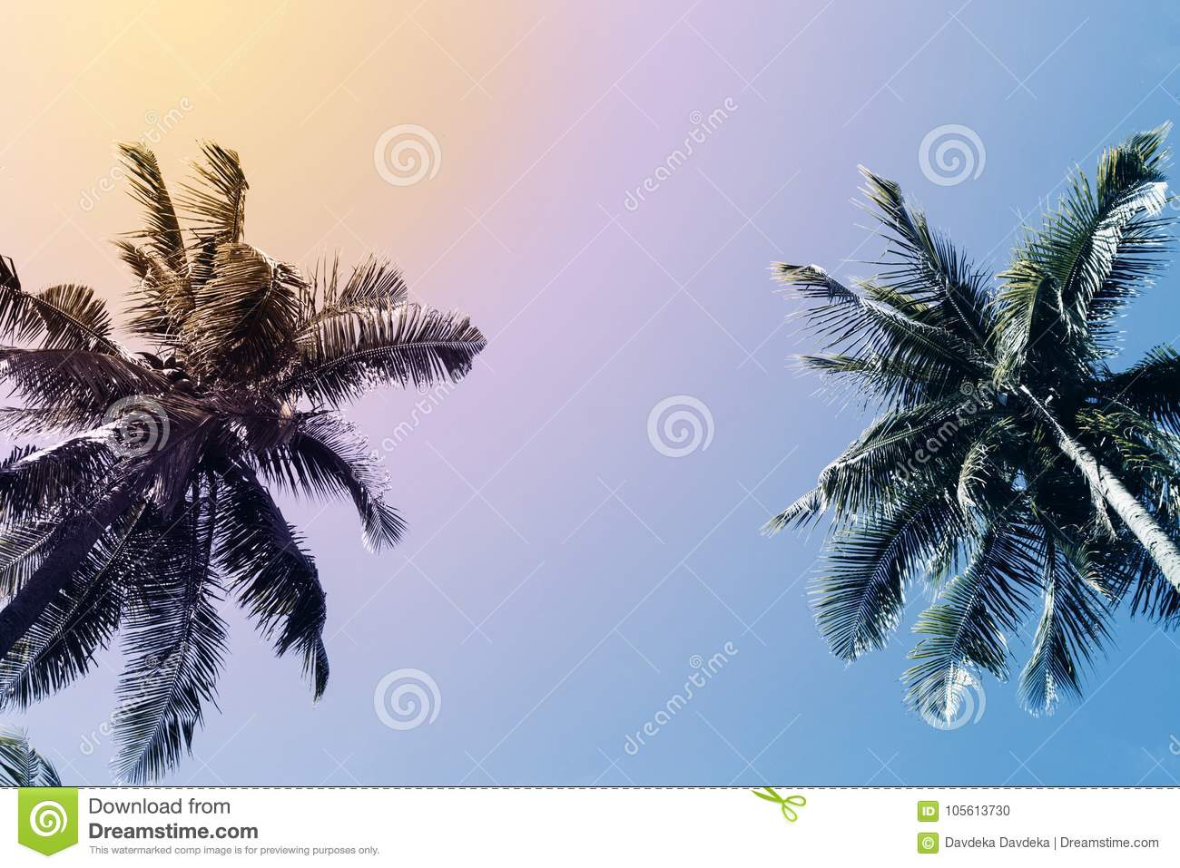 Green palm tree silhouette on sunset sky background. Coco palm vintage toned photo.