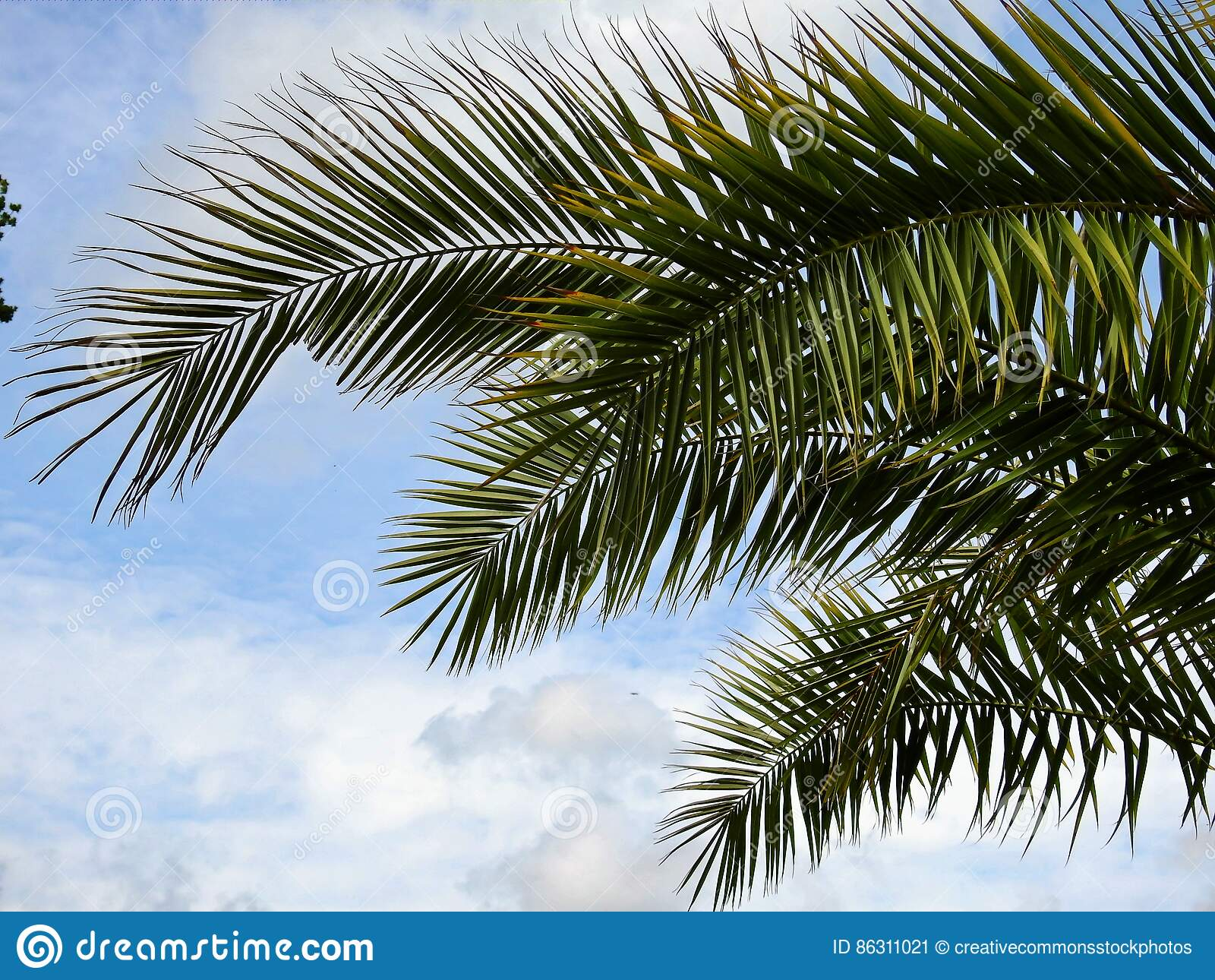 Free Public Domain CC0 Image  Green Palm Tree Under Blue Cloudy Sky ... 88bde4dec4e