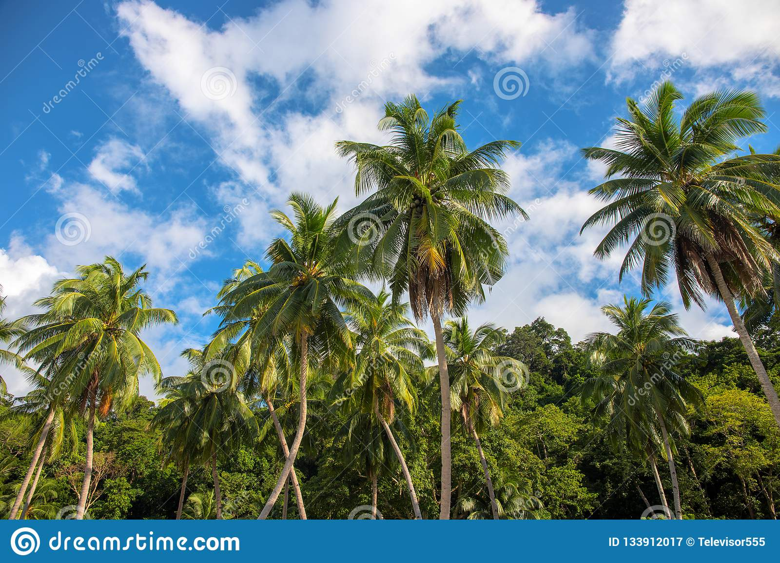 SUNNY BEACH TROPICAL PARADISE PALM TREES WALL POSTER ART PICTURE PRINT LARGE