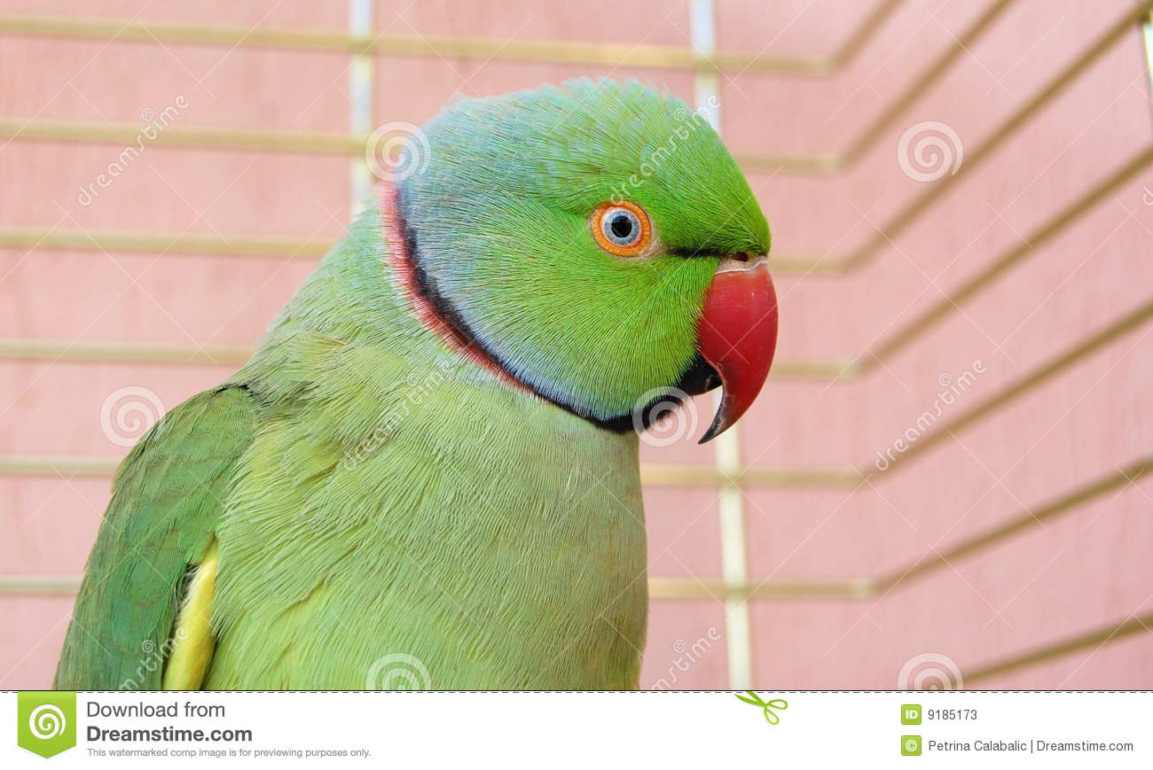 Green Parrot In The Cage Stock Photos - Image: 9185173