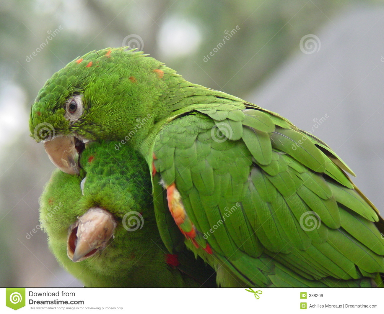 beautiful parrot wallpaper download