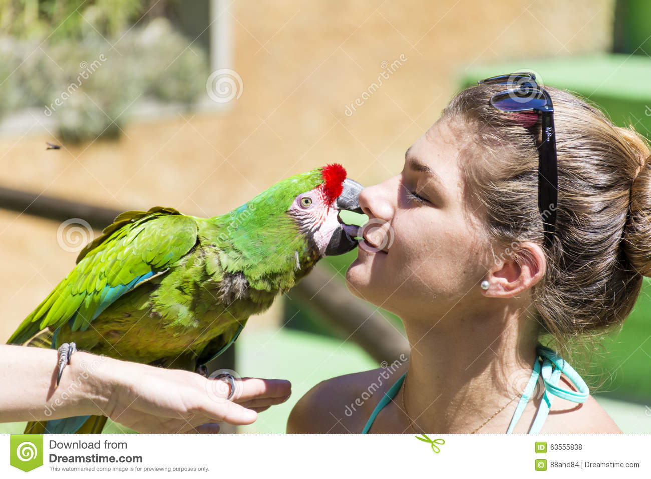 Image of: Funny Green Parrot Kissing Girl love Animals Dreamstimecom Green Parrot Kissing Girl love Animals Editorial Stock Photo