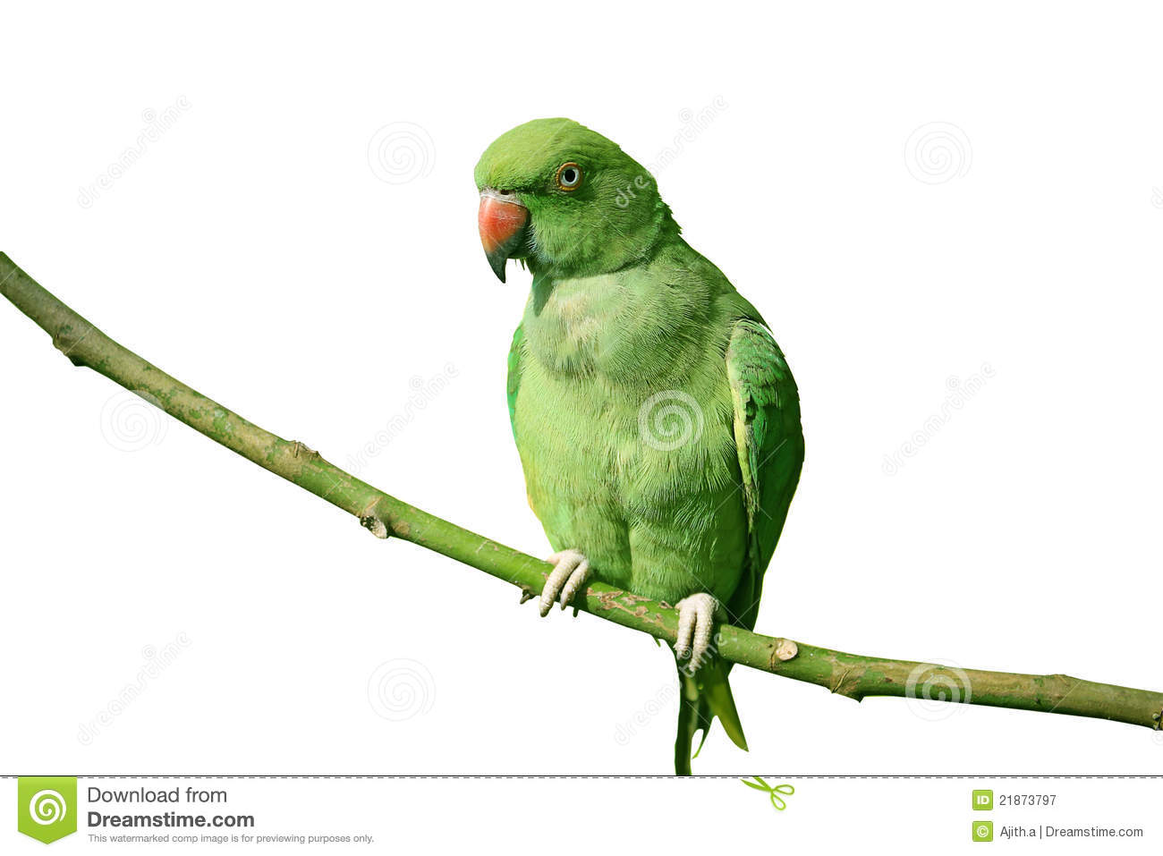 Green Parrot On White Background Royalty Free Stock Photography ...
