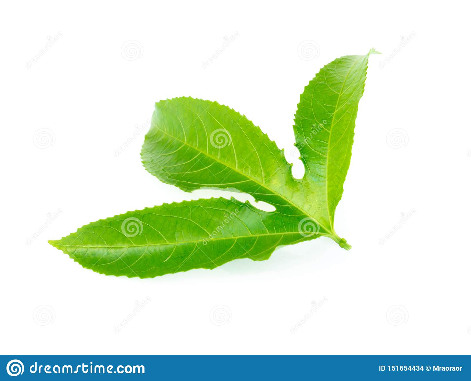 Green passion fruit leaf isolated on white background