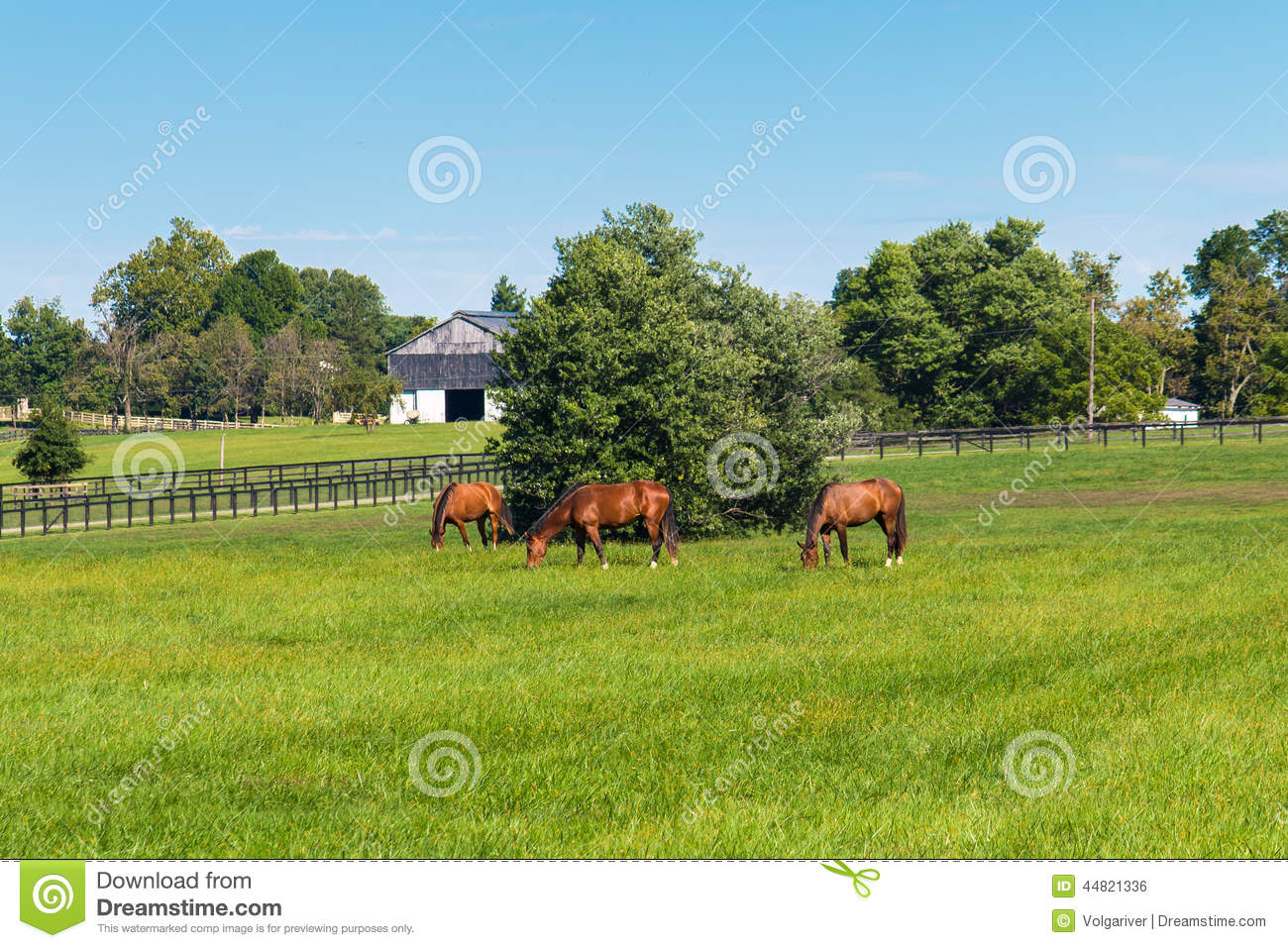 Horse grazing on green pastures of horse farm country for Horse farm