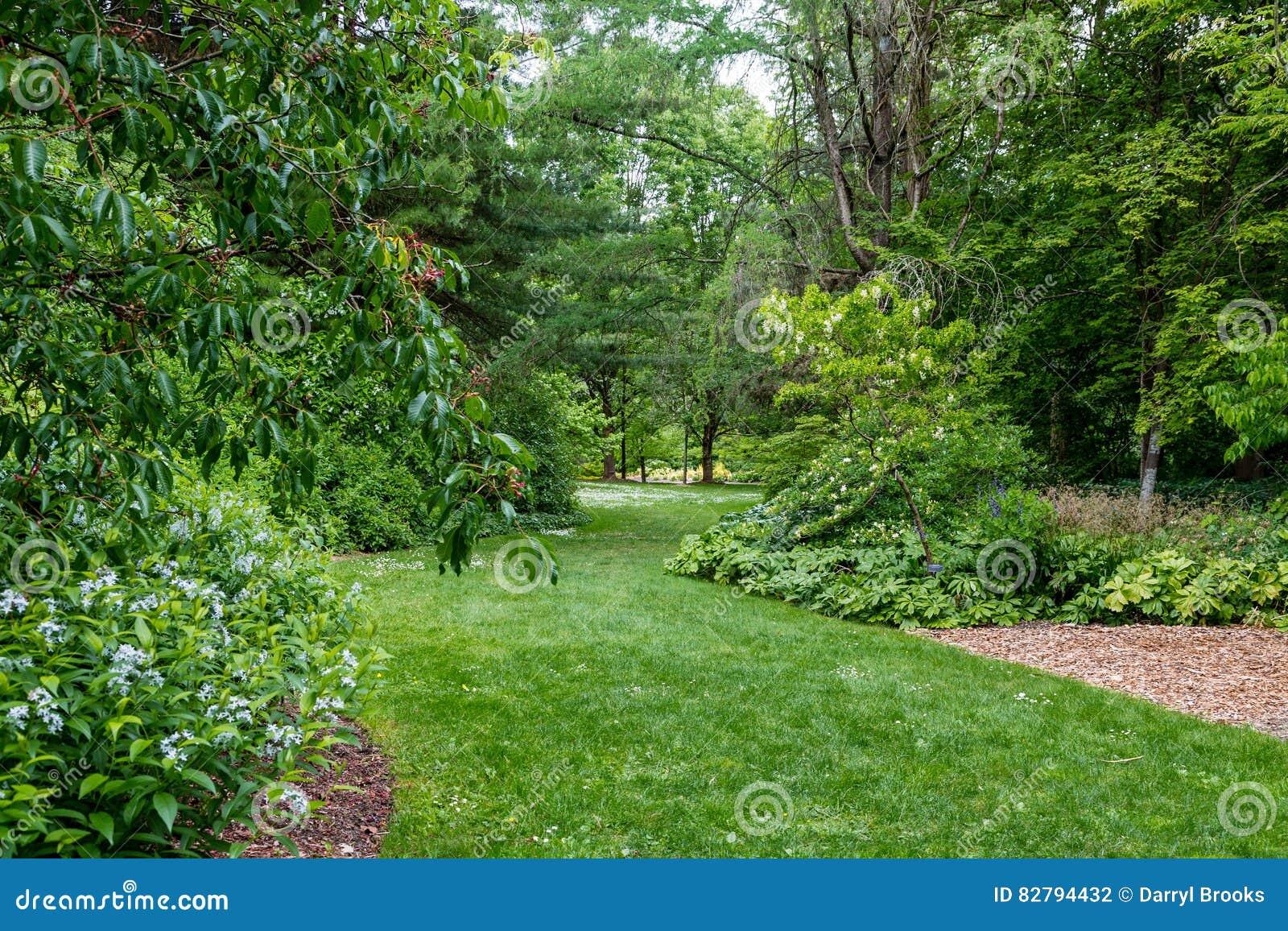 Green Path Through Lush Park