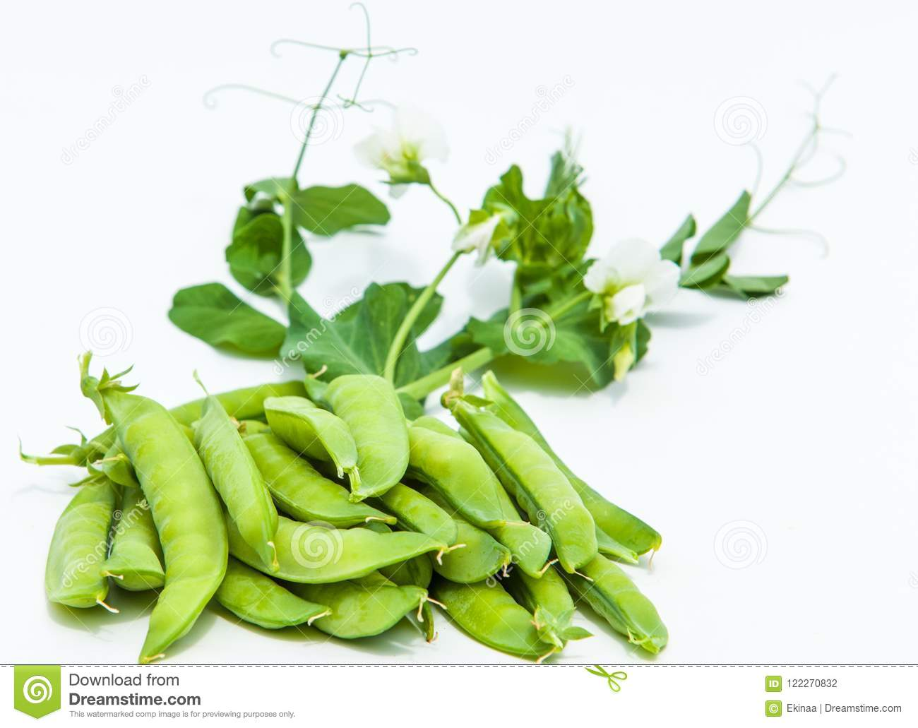 green pea. bush
