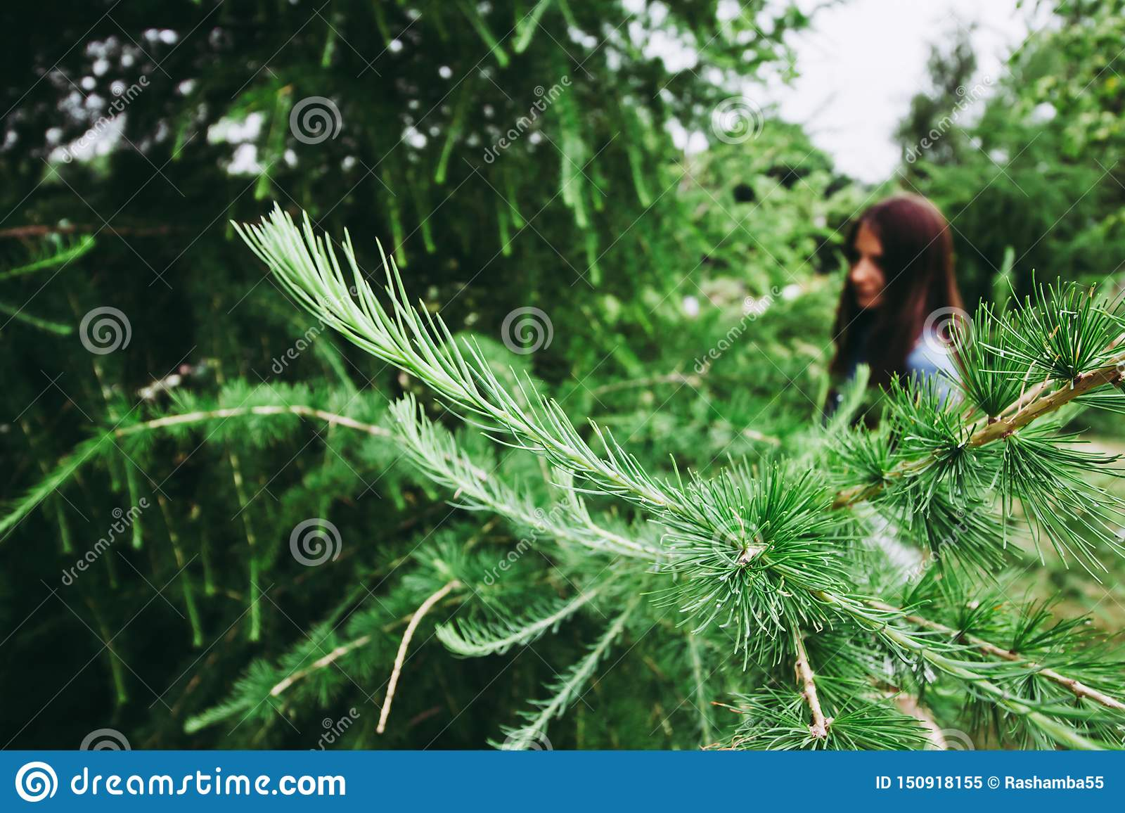 Green pine branches on the bokeh background of girl