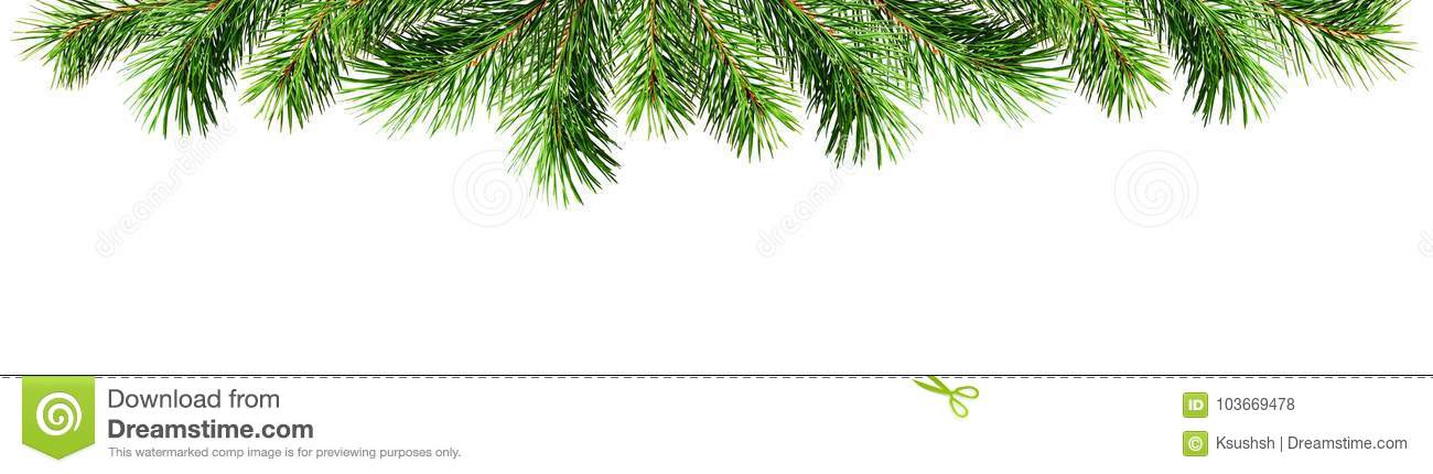 Green Pine Twigs For Christmas Top Border Stock Photo