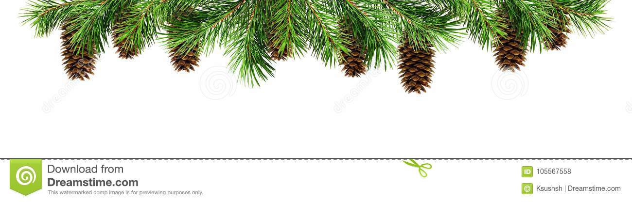 Christmas Top Border.Green Pine Twigs And Cones For Christmas Top Border Stock