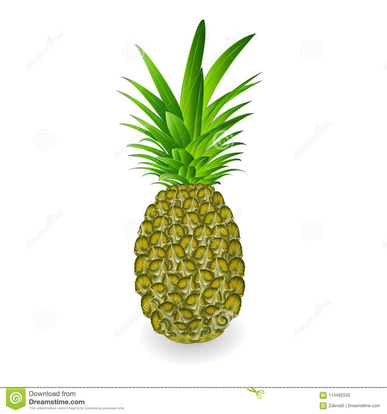 green pineapple tropical fruit isolated on white background vintage