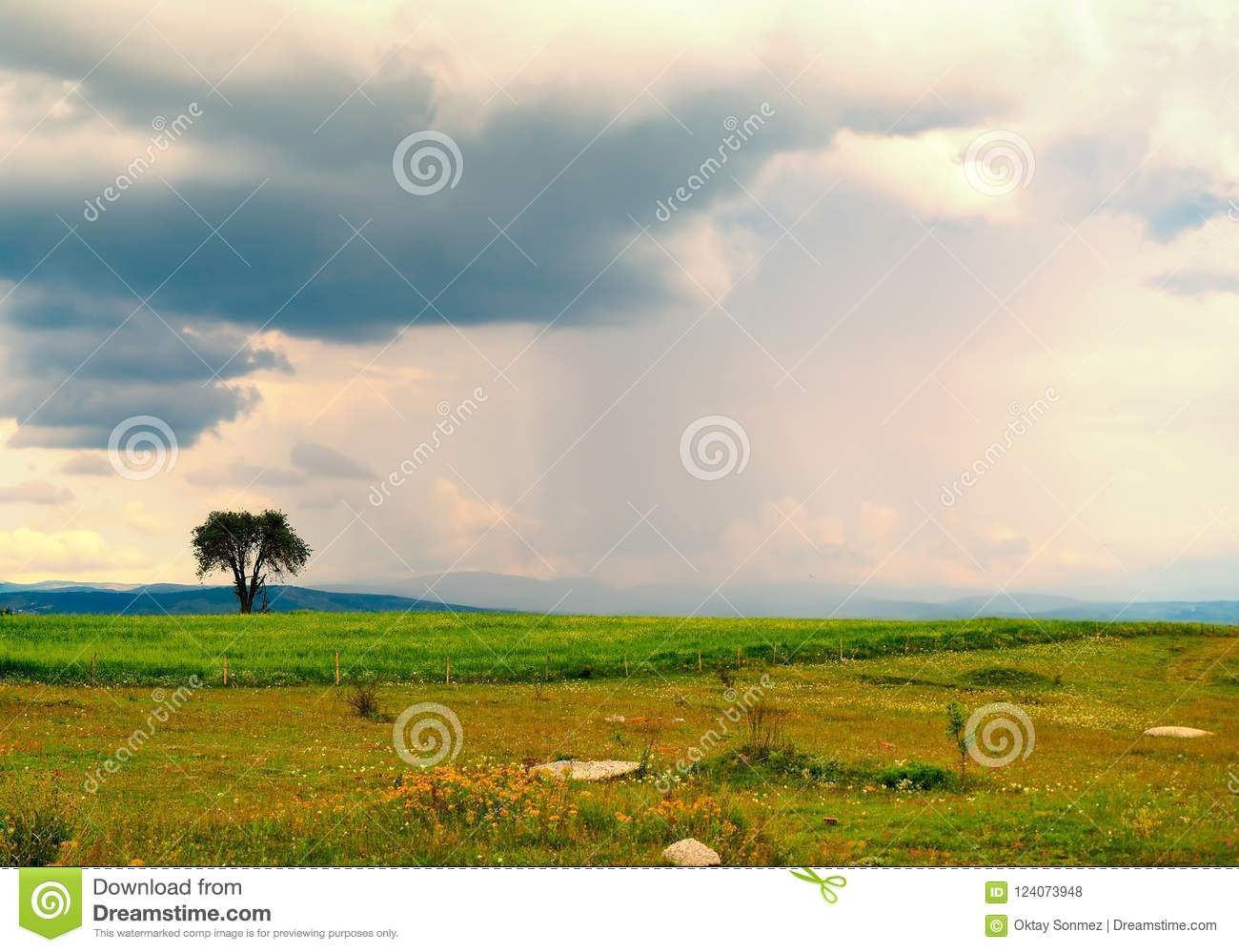 Green plain tree and sky view in turkey