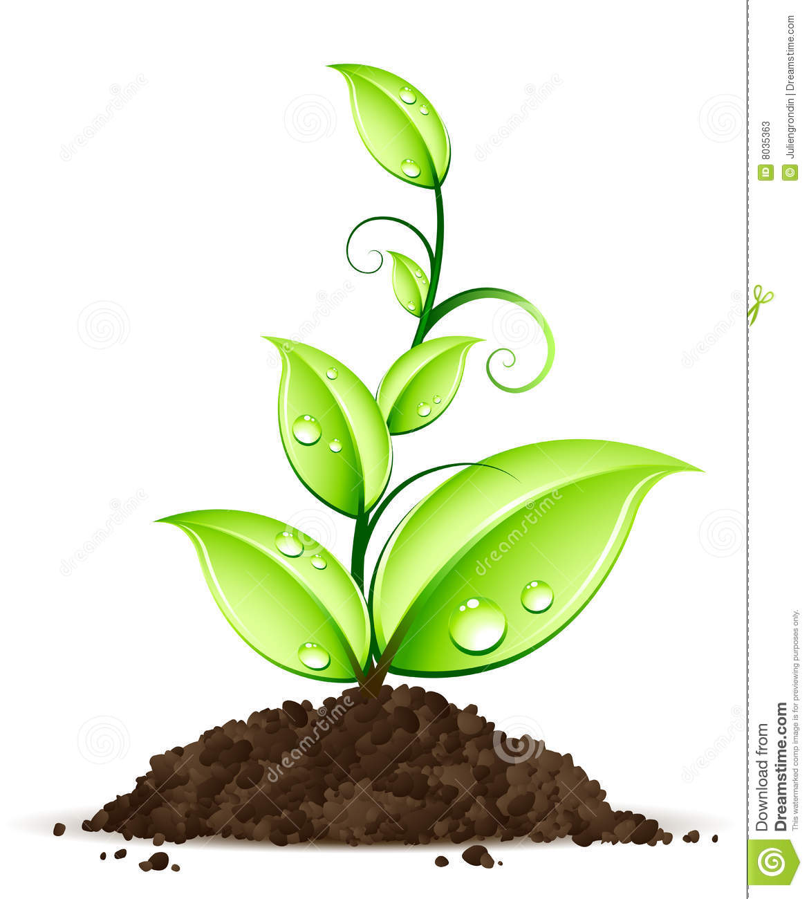 Green plant stock vector illustration of stem growing for Green plants for garden