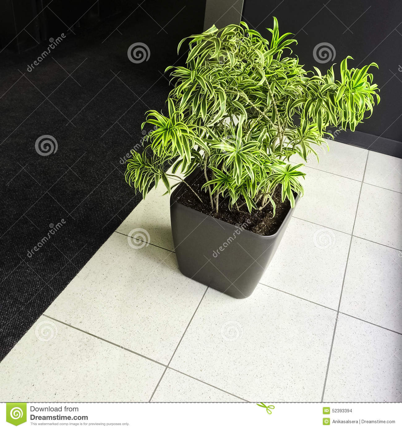 Green plant on black and white floor stock photo image for Green floor plant