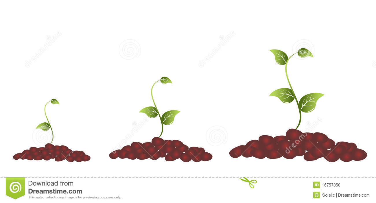 Green Plant Blooming Stock Vector Illustration Of Seed 16757850