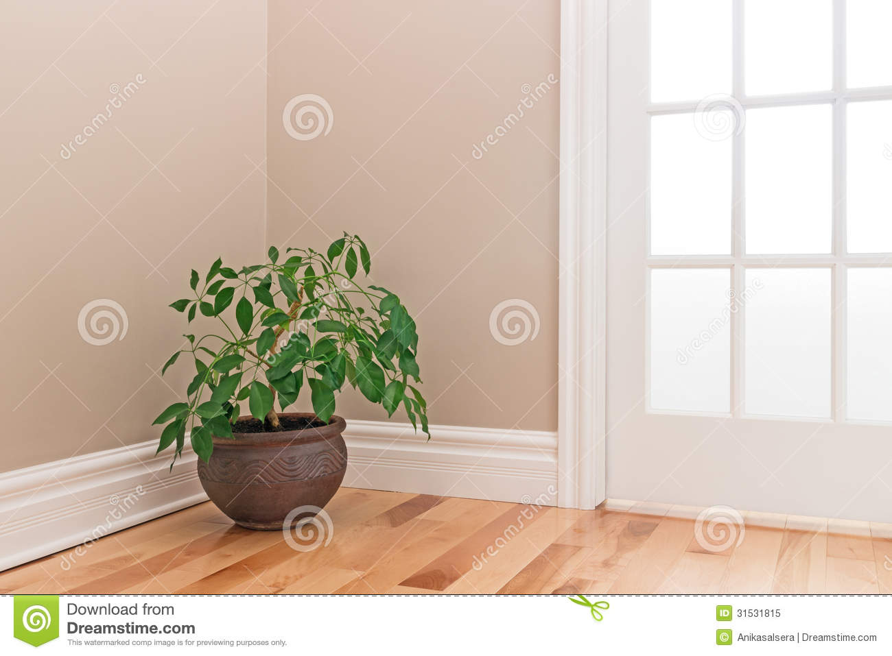 Exceptional Green Plant Decorating A Room Corner