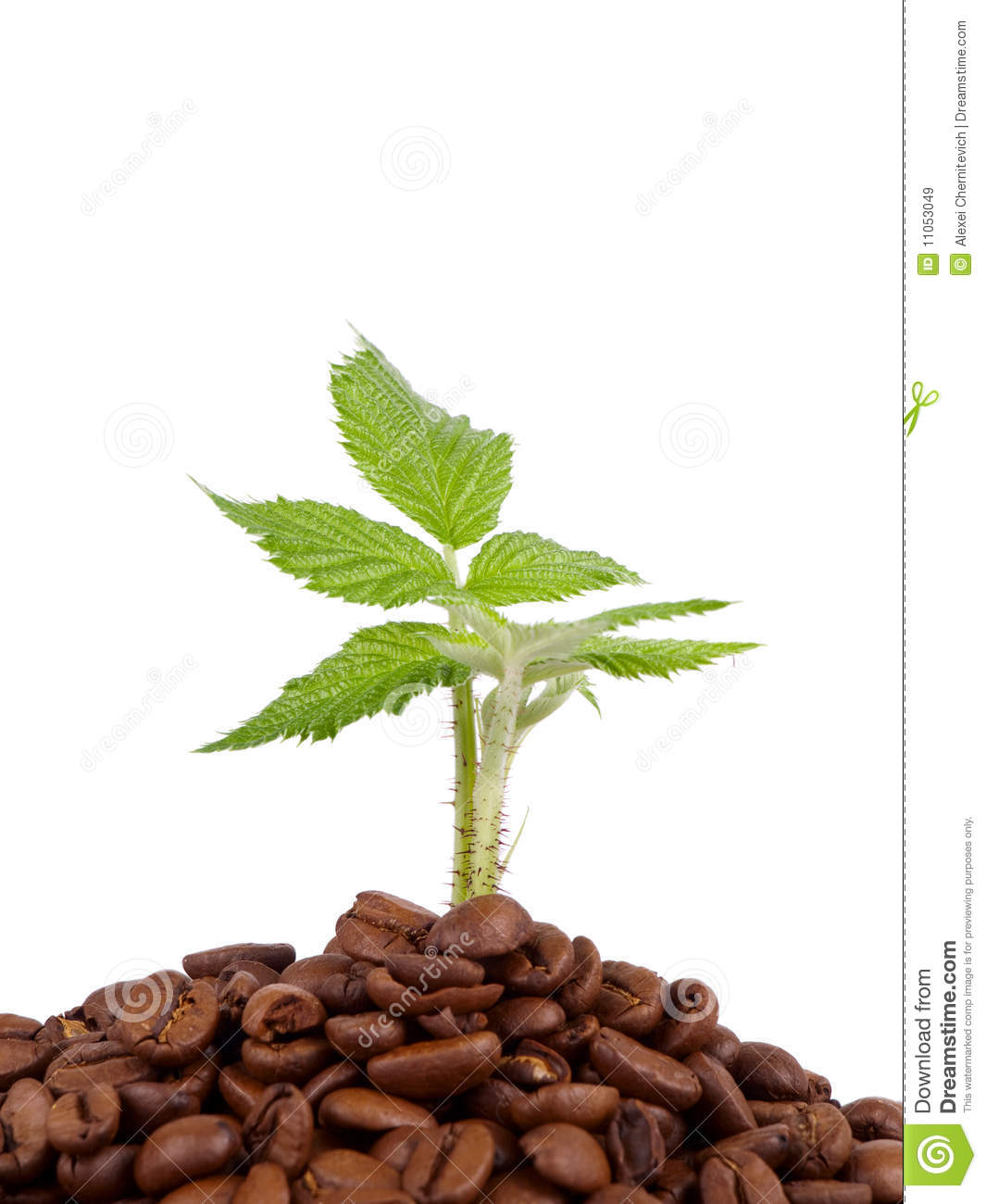 green plant growing in a coffee beans royalty free stock. Black Bedroom Furniture Sets. Home Design Ideas
