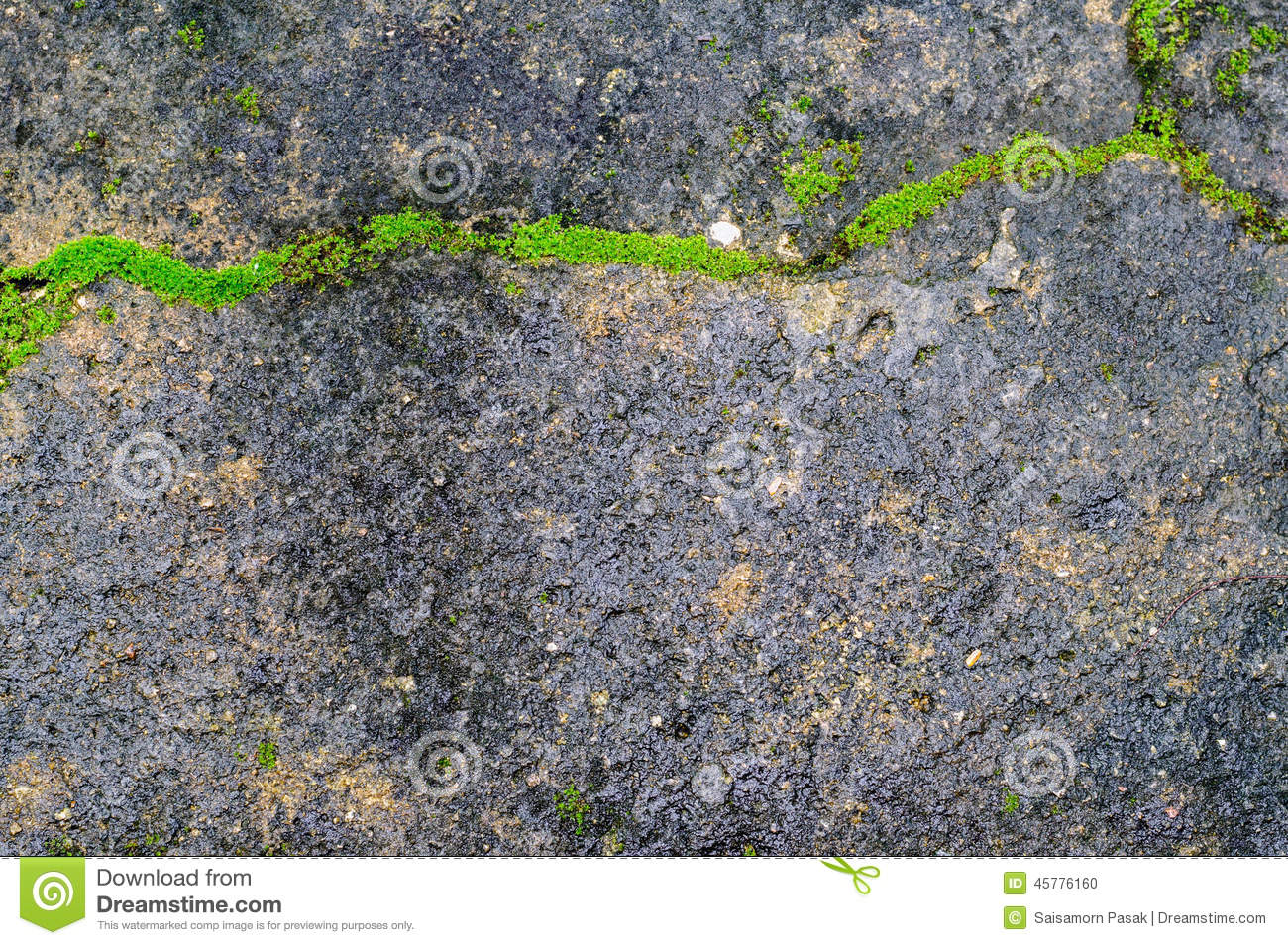 Green Plant Growing Out Of Floor Concrete With Cracked